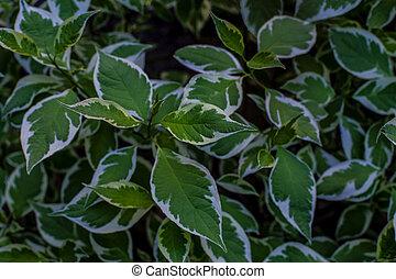 Beautiful decorative plant in garden