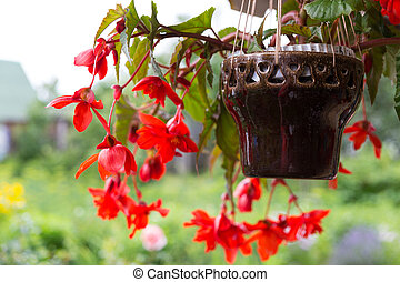 Beautiful decorative red flowers
