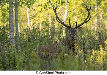 Beautiful deer in the grass