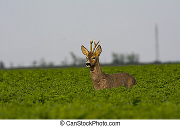 Beautiful deer on green grass