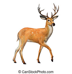 Beautiful deer with big horns Isolated illustration on white...