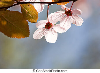 Beautiful delicate early spring flowers.