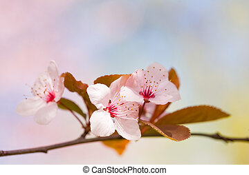 Beautiful delicate early spring flowers. - Beautiful...