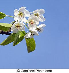 Beautiful delicate spring flowers