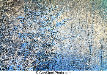 Beautiful dense hoarfrost on bare branches of a tree
