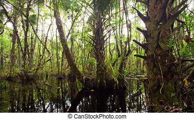 Beautiful dense swamp in Florida Everglades