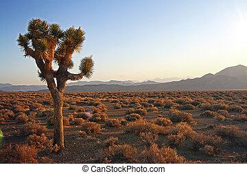 beautiful desert at sunset
