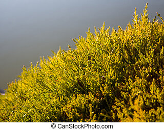 Beautiful detail on the small branches of a hedge