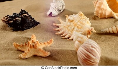 Beautiful different sea shellsand starfish on beach sand,...
