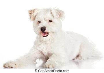 Beautiful Dog isolated on white background