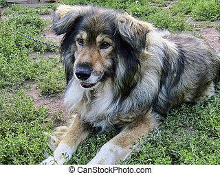 beautiful dog Jack thought about something while sitting on...