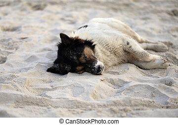 Beautiful dog lying on a yellow sand