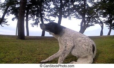 Beautiful dog on a walk