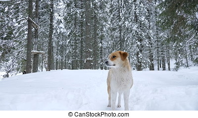 Beautiful dog playing in winter forest in mountains