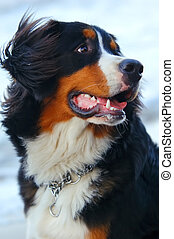 Beautiful dog portrait