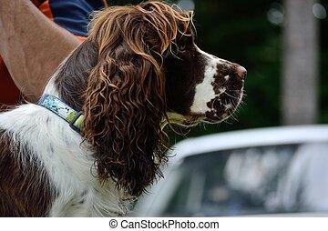 beautiful dog - side portrait - seitliches Hundeportrait -...