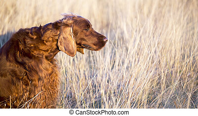 Beautiful dog smelling in the grass