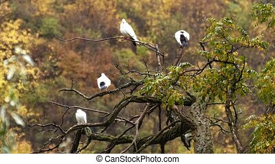 Beautiful Doves Sitting on a Tree