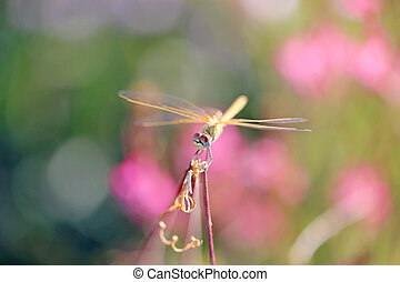 Beautiful dragonfly on a background of flowers