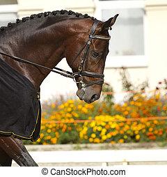 dressage horse -  beautiful dressage horse
