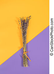 Beautiful dried lavender bouquet on violet yellow surface....