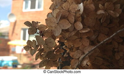 beautiful dry buds grow on the street amid the House...