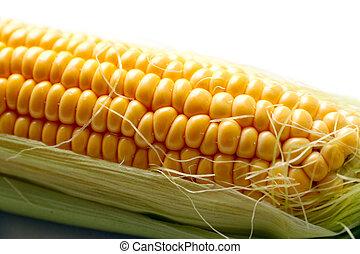 ear of ripe corn