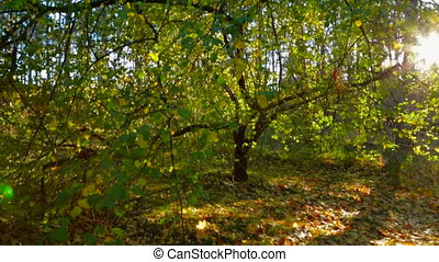 Beautiful Early Autumn In Bright Deciduous Tree Forest