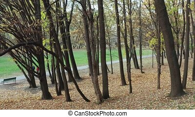 Beautiful early autumn park with yellow leaves, ...