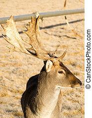 Beautiful Engaged Wildlife Young Male Buck Deer Antlers Horns