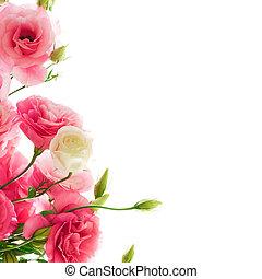 Beautiful Eustoma Flowers on the White Background -...