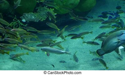 Beautiful exotic see fish in an aquarium. Underwater Scene, 3840x2160