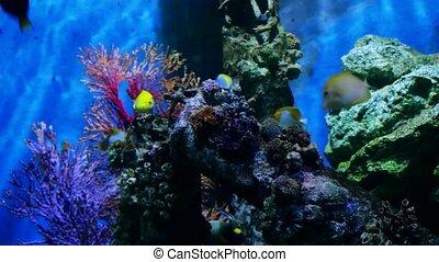 Beautiful exotic see fish in an aquarium. Underwater Scene. 4k, 3840x2160