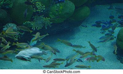 Beautiful exotic see fish in an aquarium. Underwater Scene