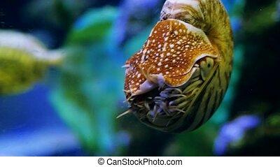 Beautiful exotic see fish in an aquarium. Underwater Scene. 3840x2160, 4k