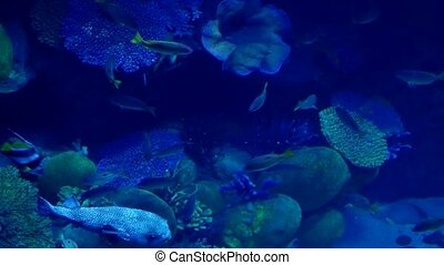 Beautiful exotic see fish in an aquarium. Underwater Scene.