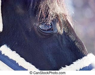 beautiful eye of black horse. closeup