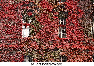 Beautiful facade of a building