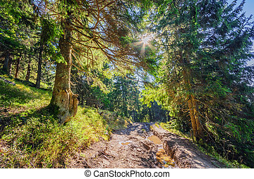 Beautiful fairy old pine forest in the early morning in the sunlight