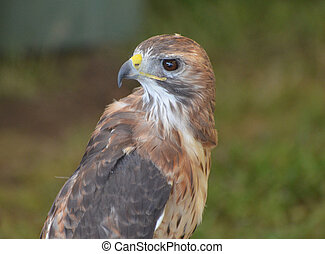 Beautiful falcon looking behind itself with opened eyes