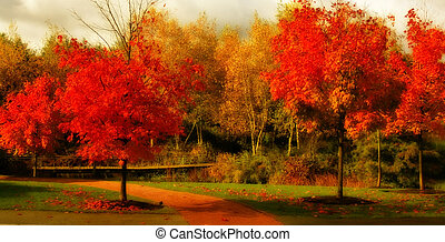 Beautiful fall color - Orange leaves on trees in the fall.