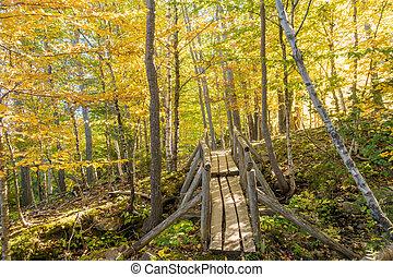 Beautiful fall colors of Acadia National Park