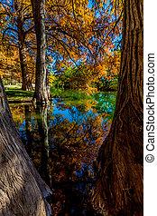 Beautiful Fall Foliage on River - A Peaceful Scene of...