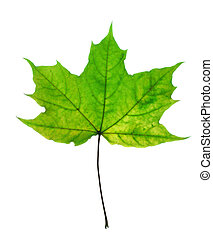 Beautiful fall leaf