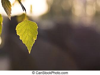 Beautiful Fall. Leaf of the tree