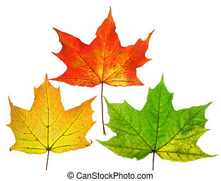 Beautiful fall leafs