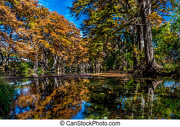 Beautiful Fall Leaves on River