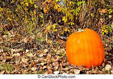 Beautiful Fall pumpkin
