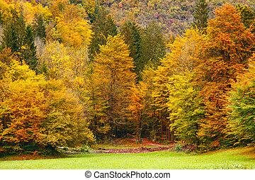 Beautiful fall scene