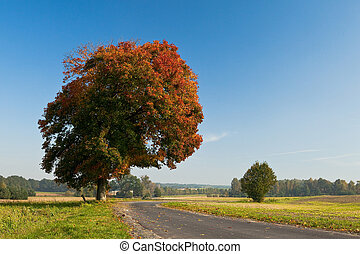 Beautiful fall scene on curved road with colorful leaves on trees and in the road
